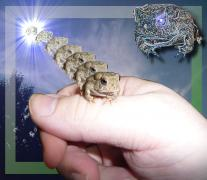 frogleap.jpg